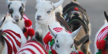 Goat Yoga Houston Penny Whistle Pub tickets