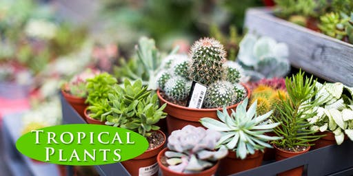 Tropical Plants - Indoor Gardening