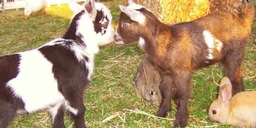 Animal Farm!