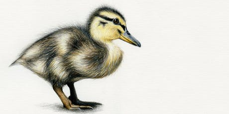 DRAW A DUCKLING WITH COLOURED PENCILS tickets