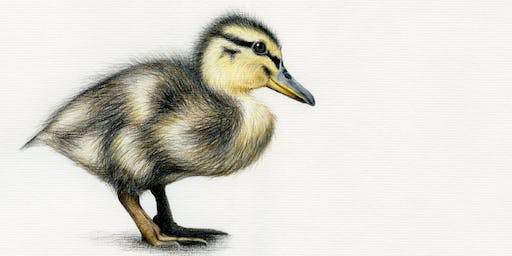 DRAW A DUCKLING WITH COLOURED PENCILS