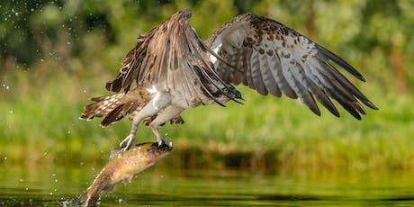 Wildlife Photography … The Basics - Gary Jones - Sunday tickets