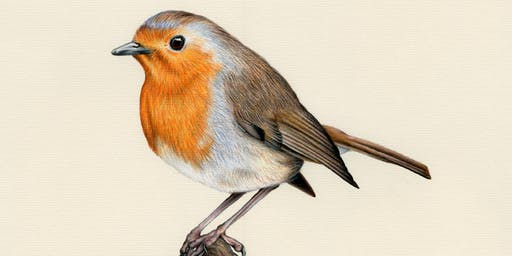 DRAW A ROBIN WITH COLOURED PENCILS