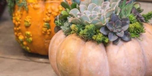 10/23 $30 Succulent Pumpkin by Wildbean @ Paint Like ME Studio