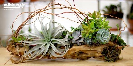 Succulent Driftwood Planter