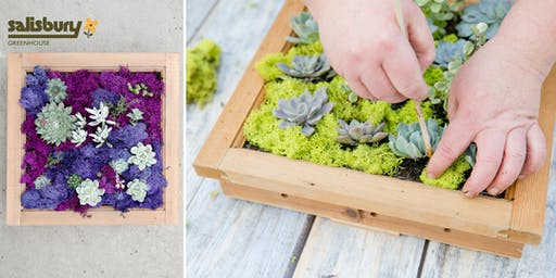 Succulent Window Frame