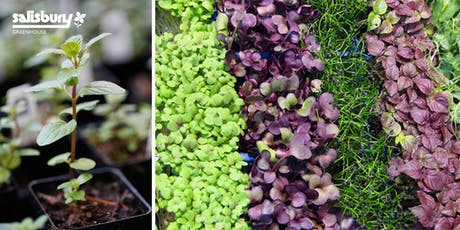 Sprouting, Microgreens, and Herbs tickets