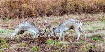 Deer ruts Photography experience