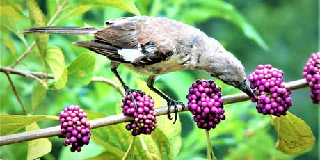Native Plants for Birds tickets