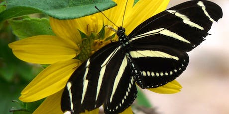 Cool Plants to Attract Butterflies and Pollinators tickets