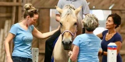 Equine Therapy Volunteer Training