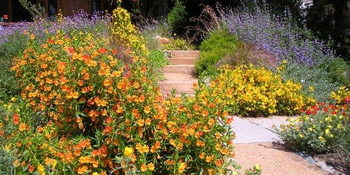 Your Native Garden's First Year with Lili Singer