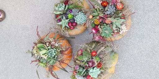 Fall succulent and pumpkin workshop