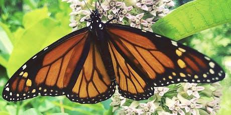Monarchs, Milkweed & More tickets