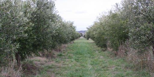 Olive Pruning Workshop
