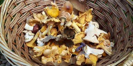 Gifford Community Woodland Fungi Foray tickets