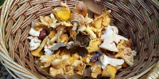 Gifford Community Woodland Fungi Foray
