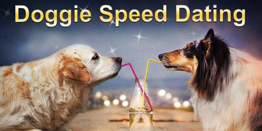 Doggie Speed Dating | Adelaide