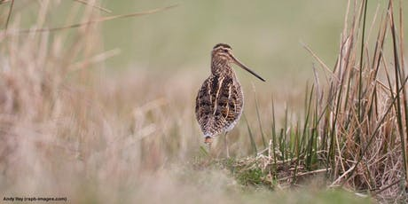 RSPB Autumn Birdwatching Guided Walk  tickets