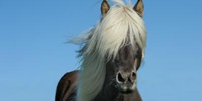 Animal Communication - Telepathy-  LEVEL 2 - Intensive Training Program
