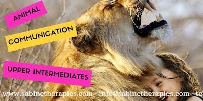 Animal Communication - LEVEL 3 -  Intensive Training Program