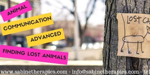 Level 4- Finding lost / missing animal with Animal Communication