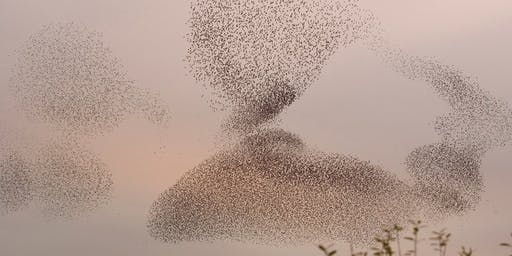 RSPB Soup and Starlings