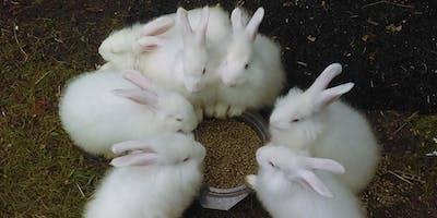 Bunny Boot Camp (TM)