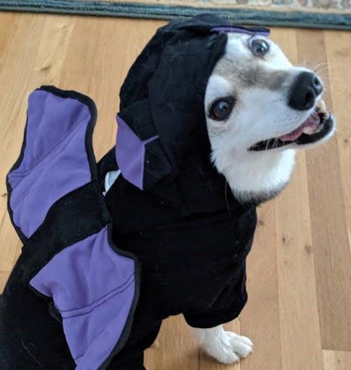 Doggie Halloween Costume Contest