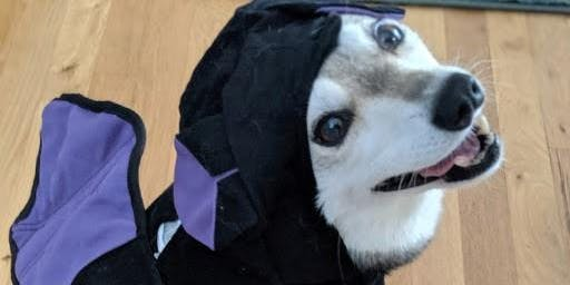 Doggie Halloween Costume Contest