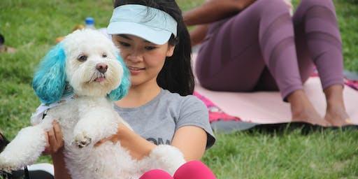 Sunday Doggie Yoga