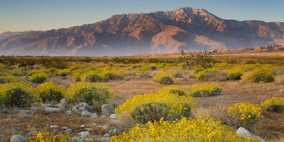 The San Jacinto Mountains