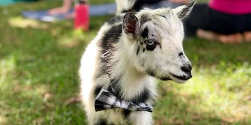 POP UP! Baby Goat Yoga