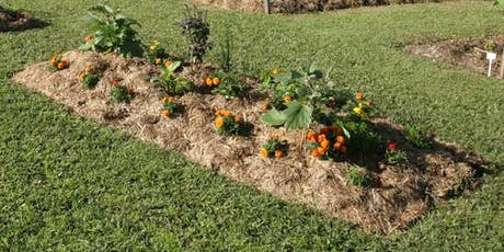 Gardening for Beginners & Introduction to No Dig Gardens tickets