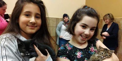Scruffy Paws Kitten Play Group - Socialization Fundraiser