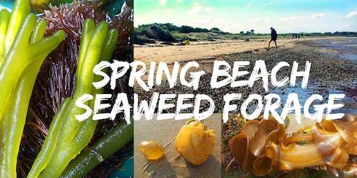 SPRING BEACH SEAWEED FORAGE