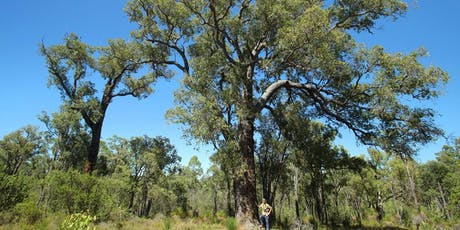 """""""By Gum!"""" - Trees of the Perth Hills with Simon Cherriman tickets"""