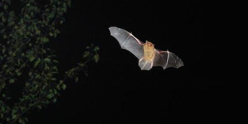 Go Batty