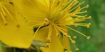 Pflanzen gegen Novemberblues