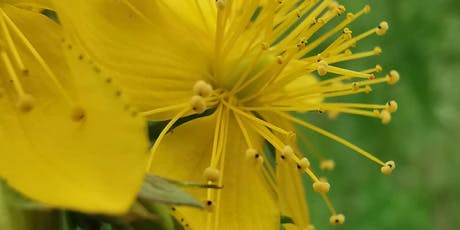 Pflanzen gegen Novemberblues Tickets
