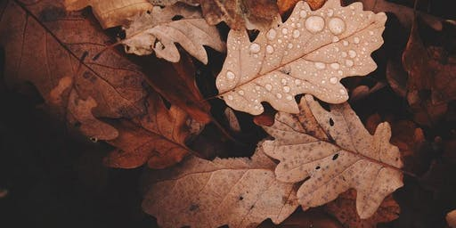 Autumn Photography Workshop