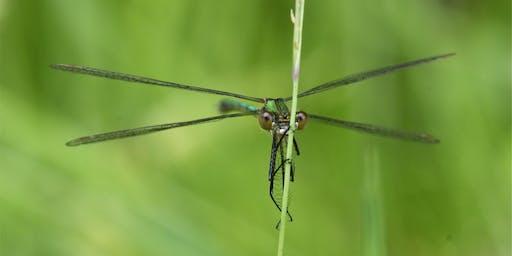 Dragonfly Walk and ID Skills