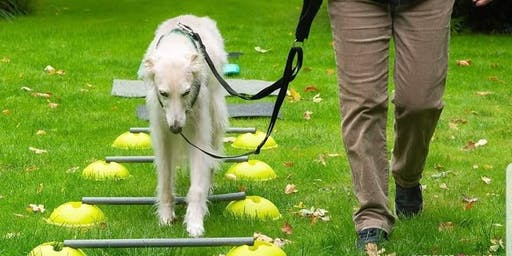 Proprioceptive awareness, What is it and how can I help my dog? (Handler)