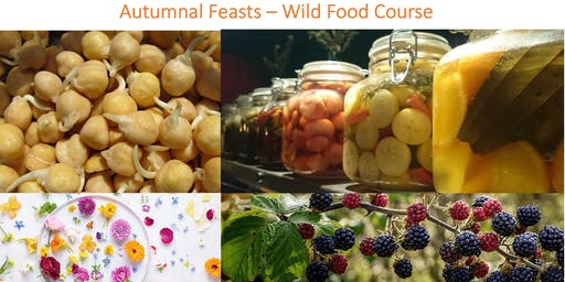 Wild Food Feast  - Autumn course - 4 evenings
