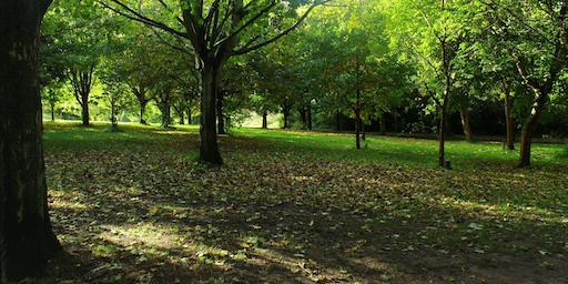 Walk on the Wild Side - Knighton Park
