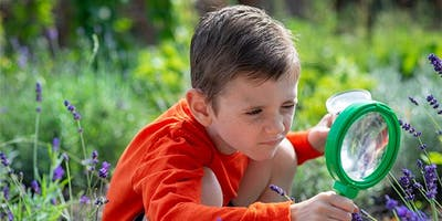 Exploring Autumn with Ilbert (Home Educators session) - Friday 20th September - Ages 3-7