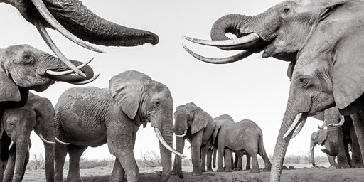 Will Burrard-Lucas: Remote Adventures in Photography (HELENSBURGH)