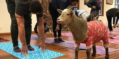 Totes Goats Yoga