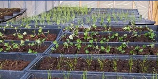 Small Scale No-Till Vegetable and Seed Production