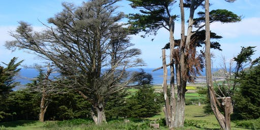 Walking Through Autumn - Seascapes and Country lanes of St Ouen